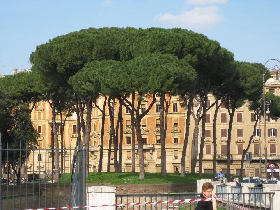 Hotel Opera Roma: The Pines of Rome