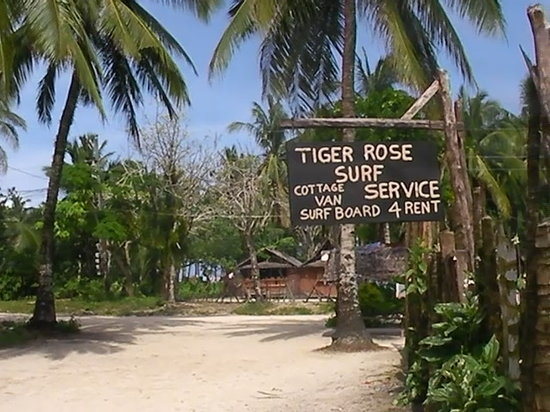 Tiger Rose Surfcamp