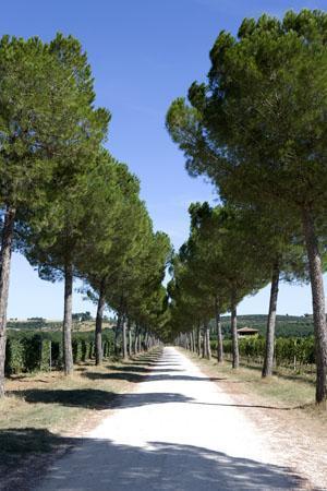 Agriturismo Poggio alle Vigne: torgiano