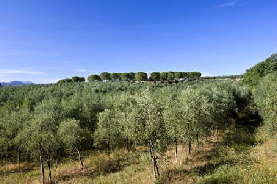 Agriturismo Poggio alle Vigne: poggio