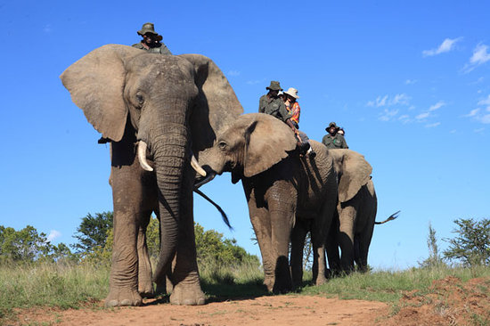 Addo Elephant National Park, Sydafrika: Elephant Back Safari