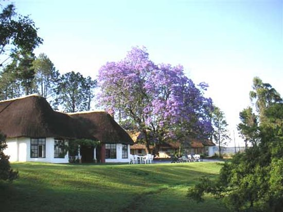 Antbear Lodge: The Guest House - Accommodation in the drakensberg