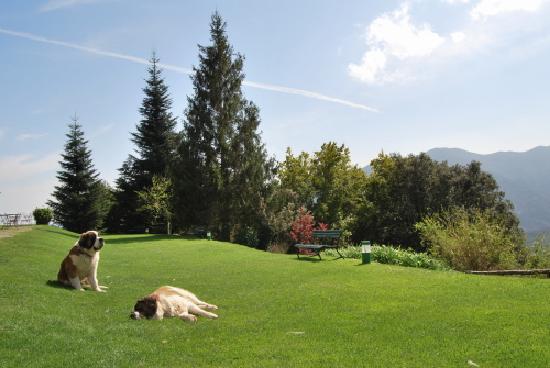 Husa Sant Bernat: Sant Bernat's Dogs