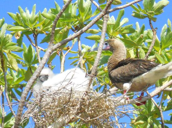 Tikehau Ninamu Resort : Île aux oiseaux