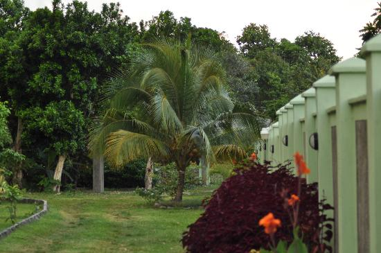 Pimento Lodge Resort: Garden