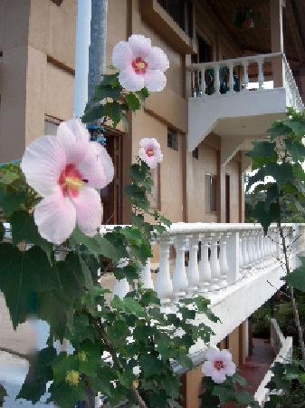 Lodge Vista Del Mar: hibiscus and balconies