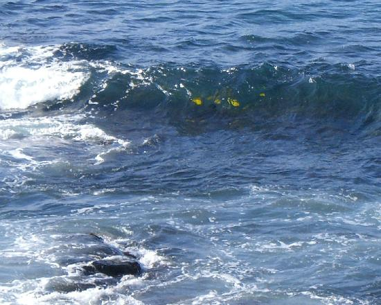 Kona Reef Resort: Yellow fish - view from linai