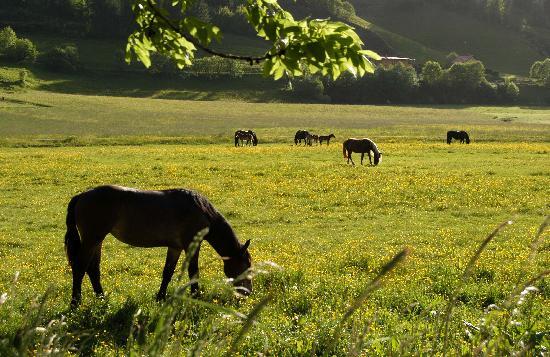 Komfortbauernhof Zittrauerhof: Noriker Pferdezuchtbetrieb