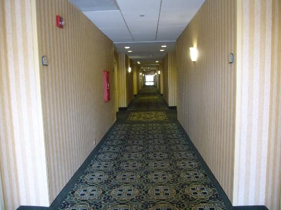 Holiday Inn Express & Suites Williamsburg : Hallway