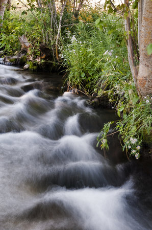 Creekside Country Haven: Rushing waters