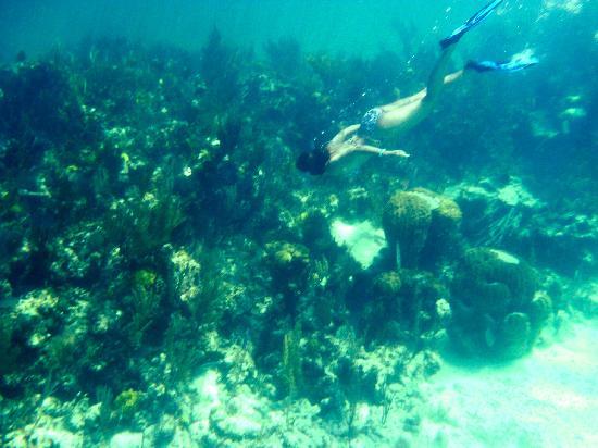 St Francis Resort: Reef near Guana Cay
