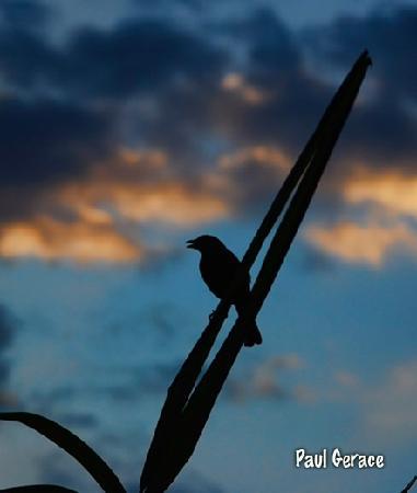 Tulemar Bungalows & Villas: Bird singing as seen from terrace.