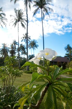 Shantaa Koh Kood : Flower on the grounds of Shantaa