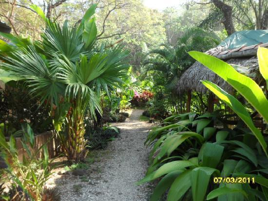 Zula Inn Aparthotel: so tropical ! the flowers and plants were amazing