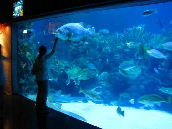 Aquaria KLCC: aquaria