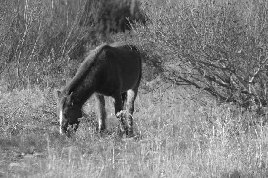 Corolla, NC: horse