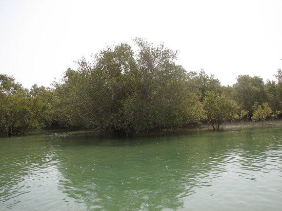 Noukhada Adventure Company - Day Tours: Abu Dhabi Mangroves
