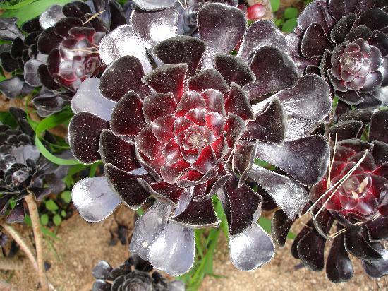Jardín Botánico de Cap Roig: Fleur