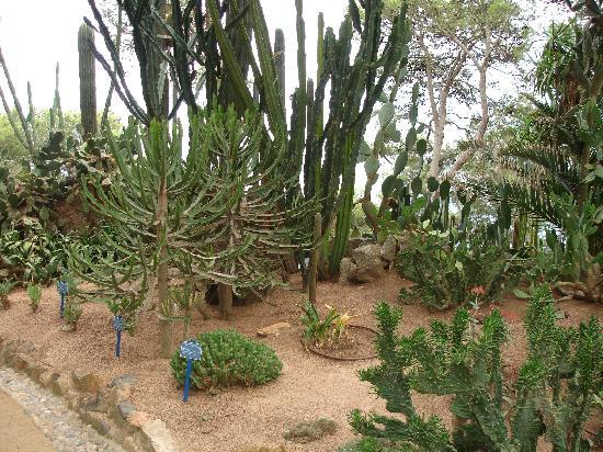 Cactus fotograf a de jard n bot nico de cap roig calella for Jardin botanico cap roig