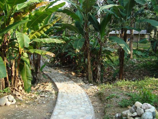 Hostal Casa del Rio: sendero hacía las habitaciones en el jardín