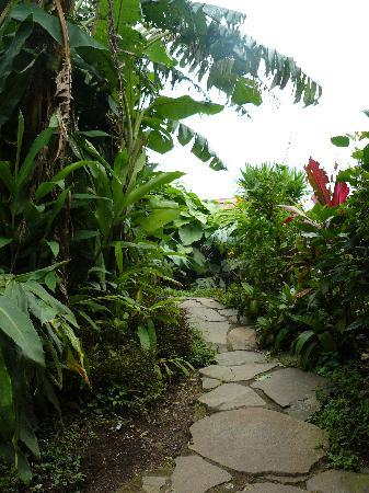 Cabinas Tina's Casitas: Path to room 25