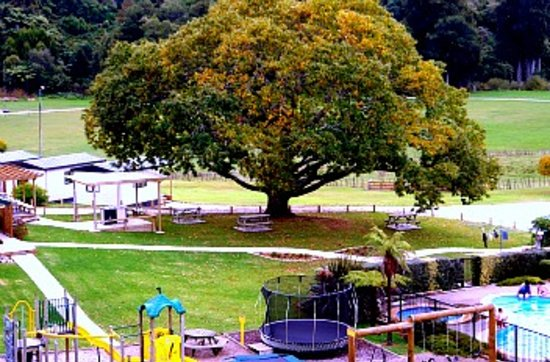 Waitomo Top 10 Holiday Park: Our beautiful chestnut tree in autumn