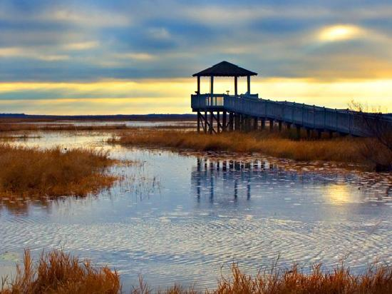 Lake Charles, LA: Experience the Creole Nature Trail All-American Road, Louisiana's outback!