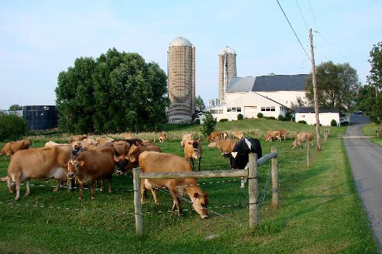 Rayba Acres Farm Image