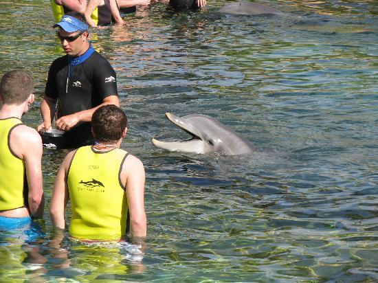 Discovery Cove: Hey someone needs a treat over here  !