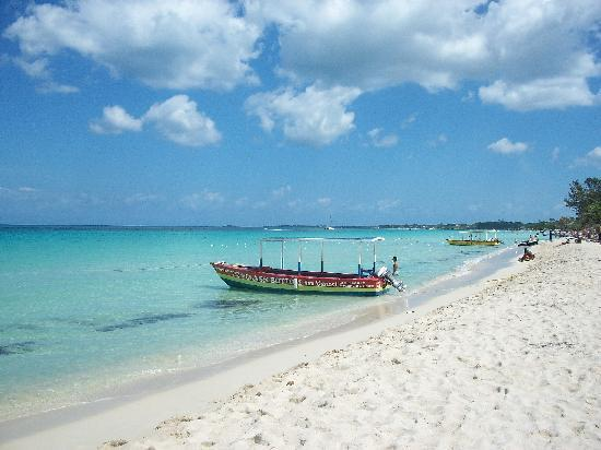 Coral Seas Garden: paradiso