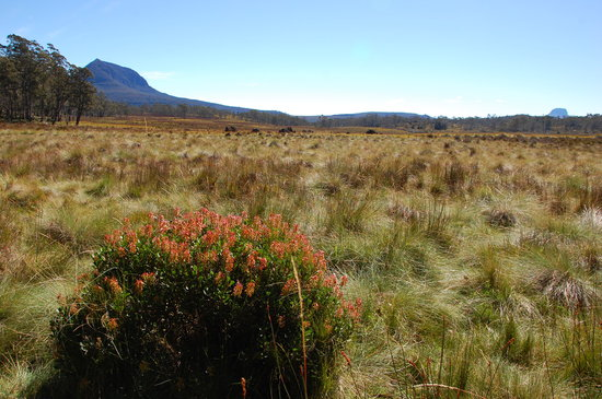 Wilderness Expeditions Tasmania Pty Ltd: Pelion Plain