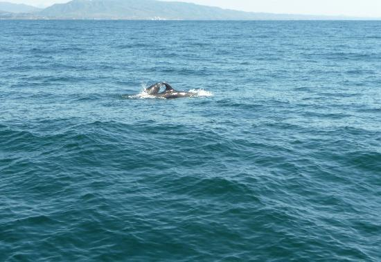 Dana Point, CA: Bottlenose dolphins