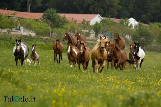 Castello del Matese, Italy: La passaggiata a cavallo