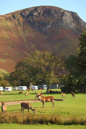 Lochranza Caravan & Camp Site: Lochranza Campsite