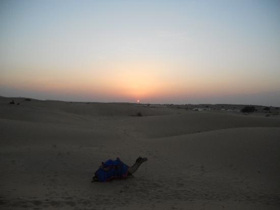 Jaisalmer, Inde : camel ride at sunset