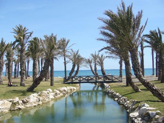 Torremolinos palms