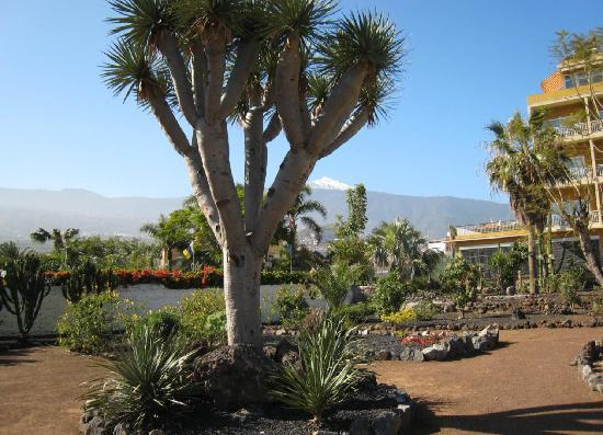 Hotel Tigaiga: Jardin Carolina