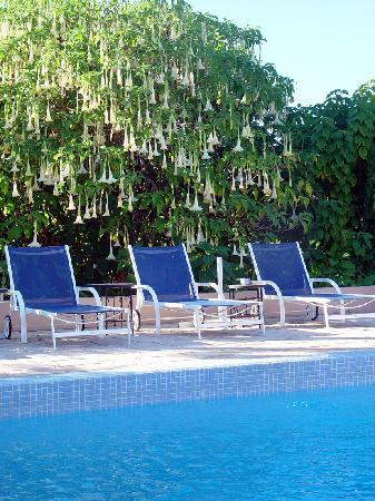 Villa Mandarine: piscine chauffée au milieu d'un jardin