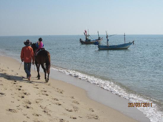 Sea Breeze Guest House : Quiet idyllic beach - horse rides available