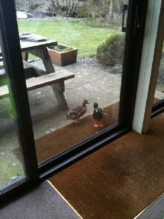 Port of Menteith, UK: Even the ducks welcomed us when we checked in.