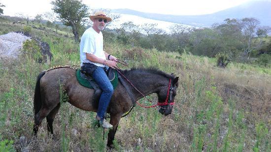 Haris'horses : Aldo