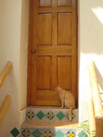 Macondo Bungalows : resident kitty sunspot outside our door :)