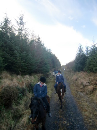 Knockillaree Riding Centre: Through the forestry
