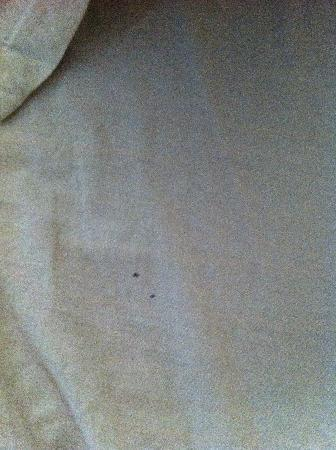 Hotel Raunak International: dirty sheets and blood stains, likely from bedbugs