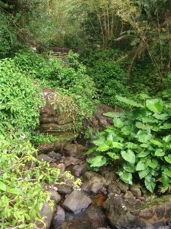 Borincano Tours: El Yunque plants