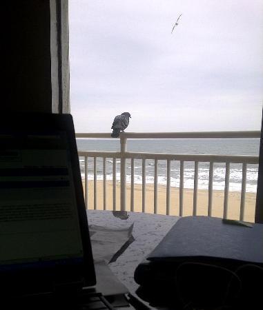 Marjac Suites Virginia Beach Oceanfront: Ocean View from my room