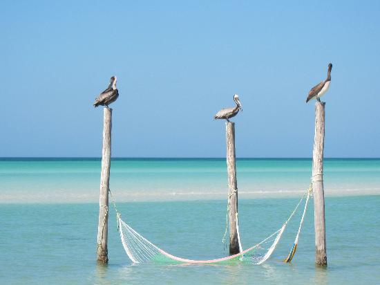 CasaSandra Boutique Hotel: Pelicans at rest