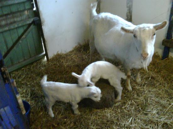 Gors yr Eira: Babies