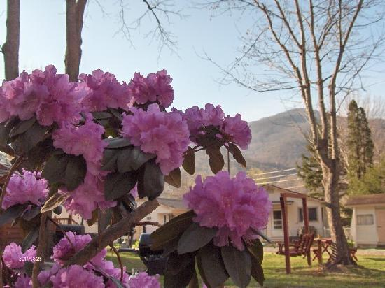 Alamo Motel & Cottages: Spring At The Alamo Motel and Cottages