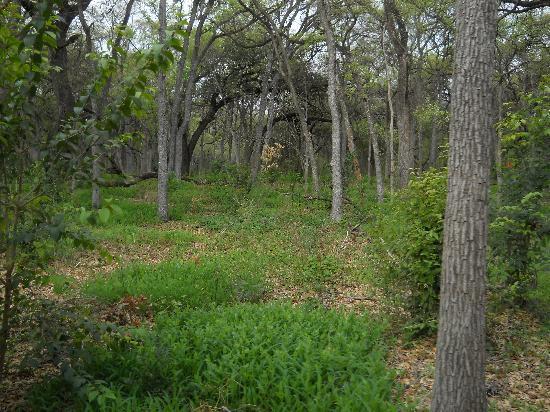 San Antonio Zoo Eagle Train: View of Brackenridge Park from the Train